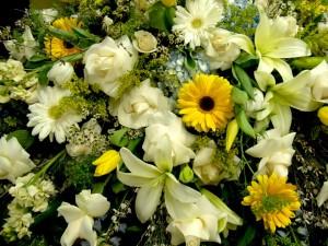 Casket-Spray-Blue-Hydrangeas-White-Tulips-White-Roses1