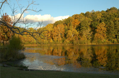 Japanese cherry trees to be planted at Clay's Cosby Lake