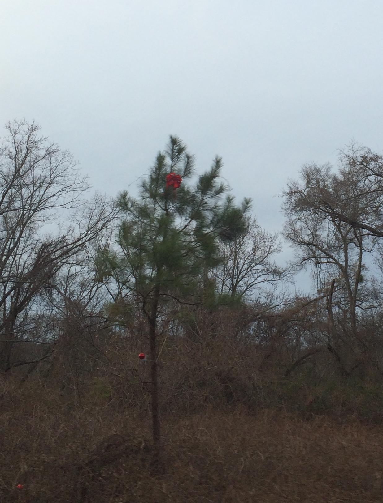 'Charlie Brown Christmas tree' in Trussville brings mystery, joy