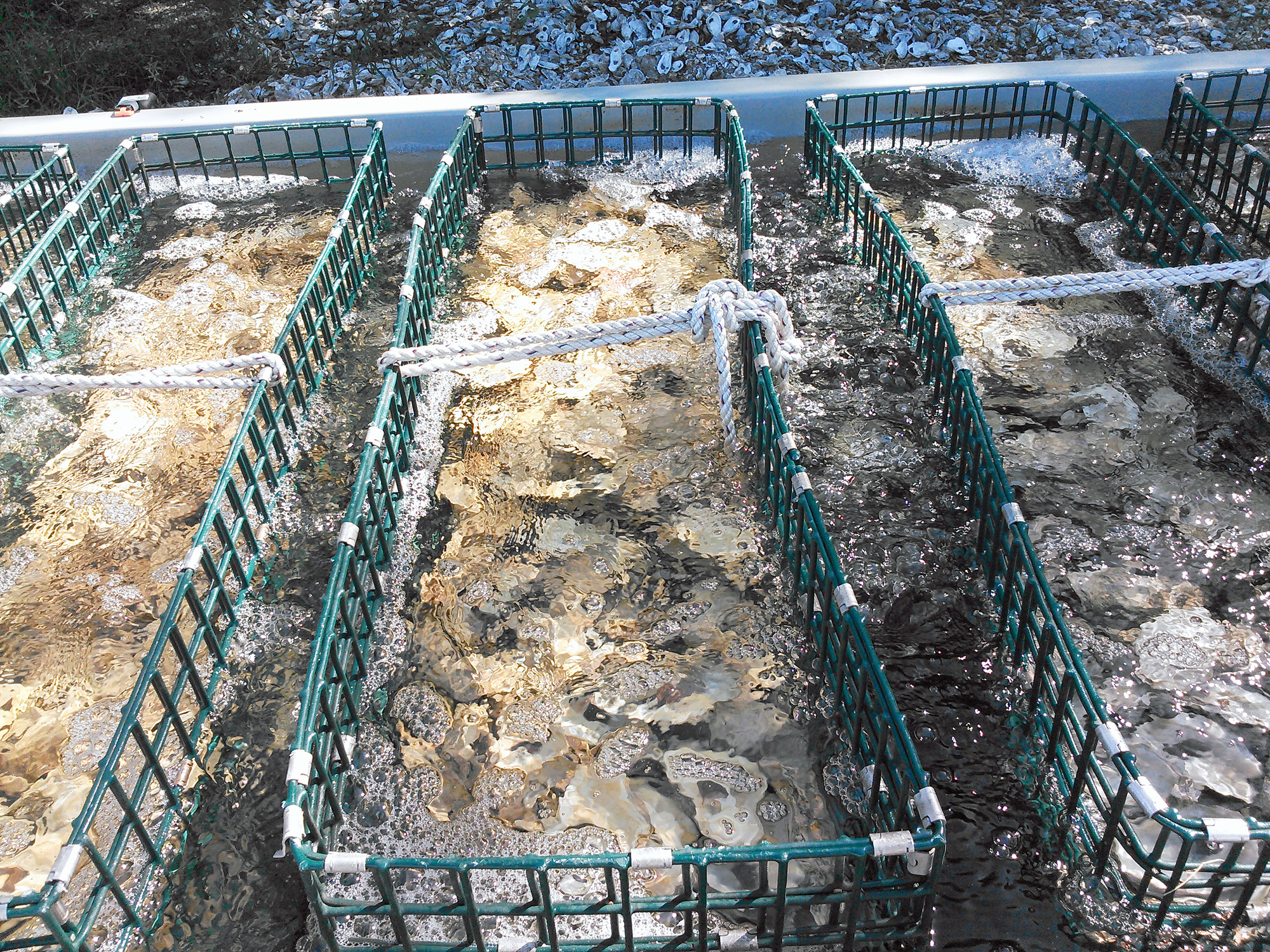 Alabama oyster supply unusually low this year