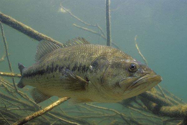 Alabama Public Health department releases advisories on fish consumption