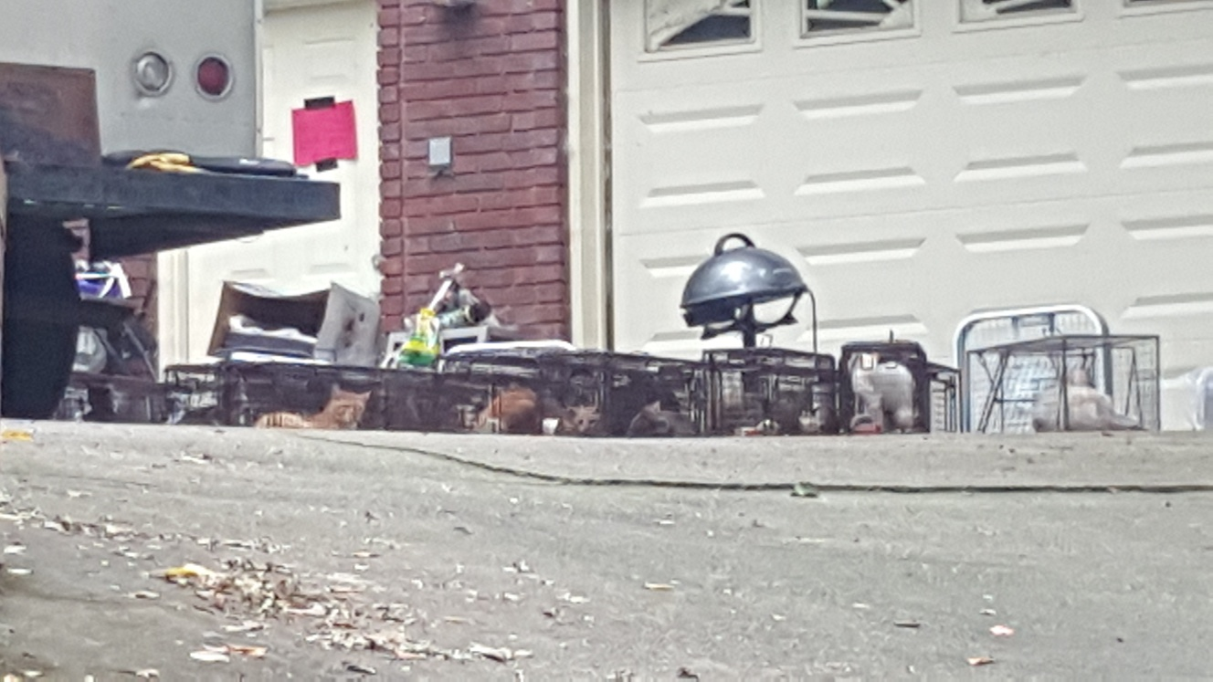 Trussville home declared uninhabitable after an estimated 100 cats found inside