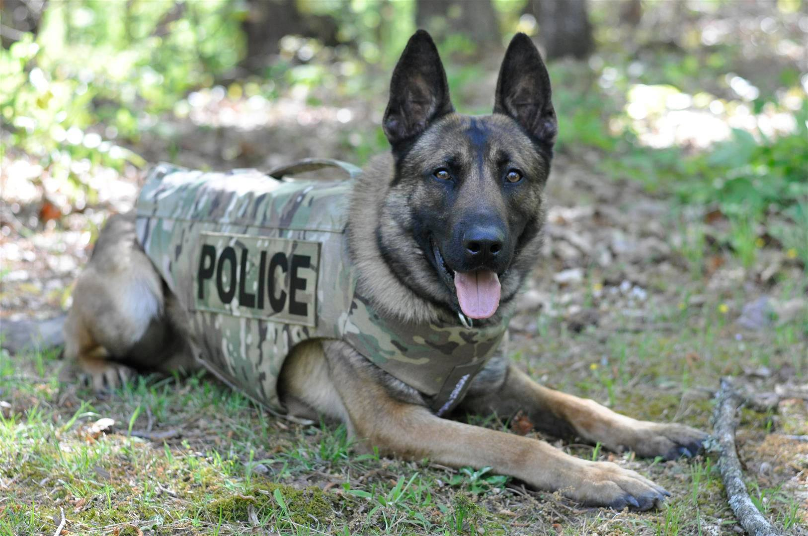 Trussville police dog receives body armor from non-profit group