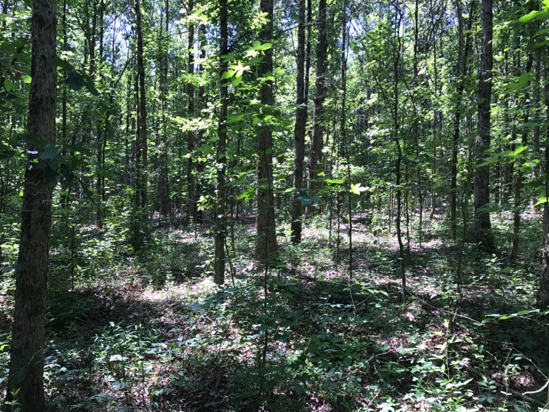 Mossy Oak Properties: Providing real estate with knowledge and skill