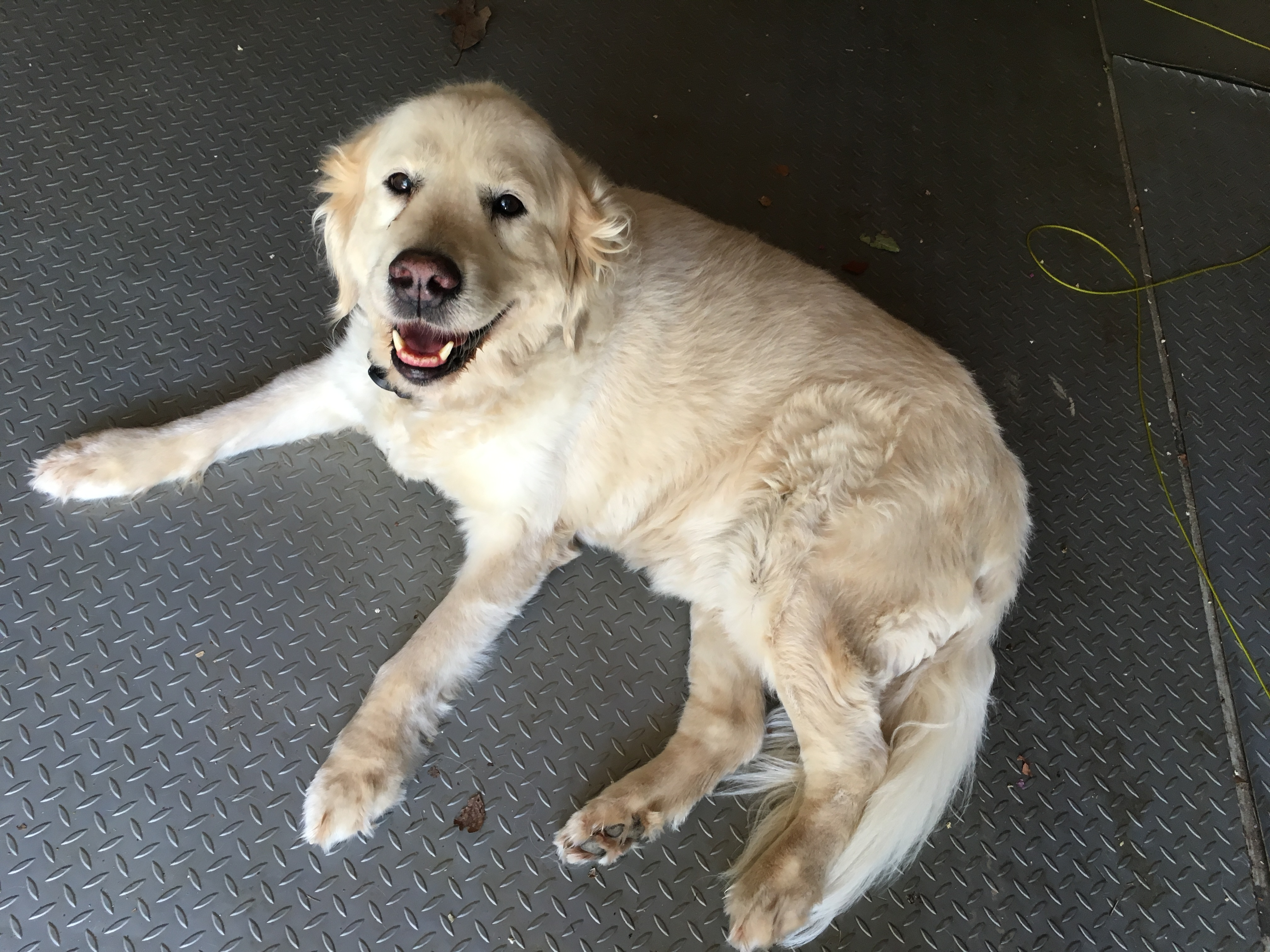 Lost pet: Missing dog from Springville