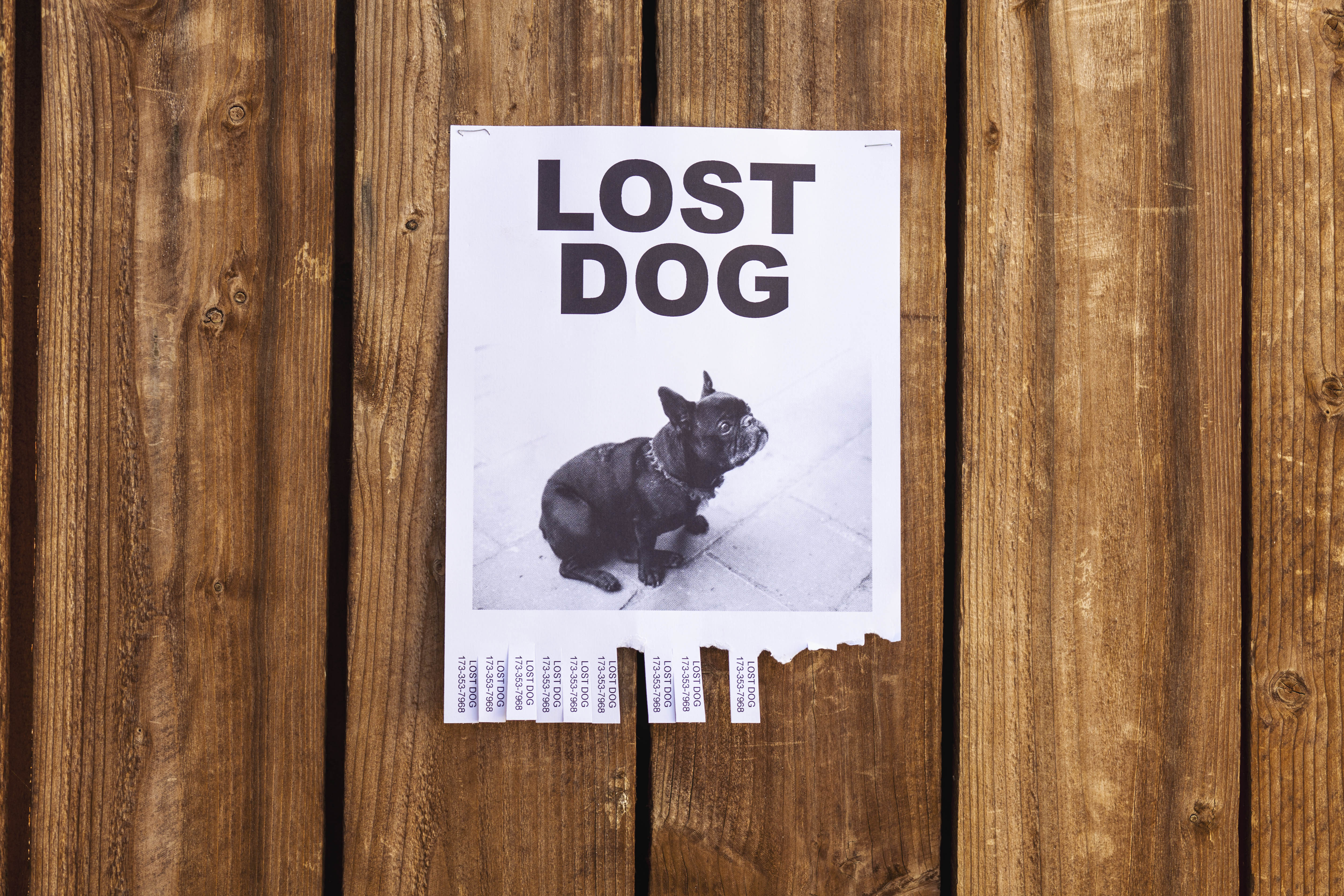 Lost a pet? Send info on lost animals to the Trussville Tribune