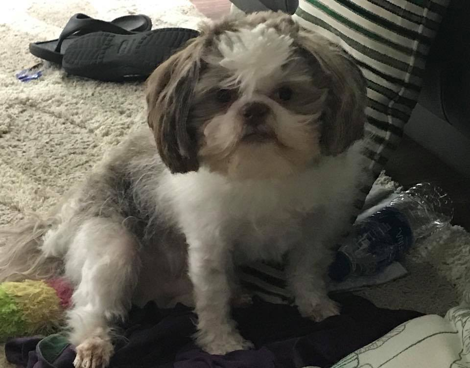Lost pet: dog missing from Leeds home