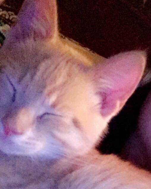 Lost pet: Cat missing from Stockton area in Trussville