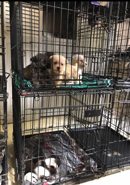 83 dogs taken from Trussville property, charges pending