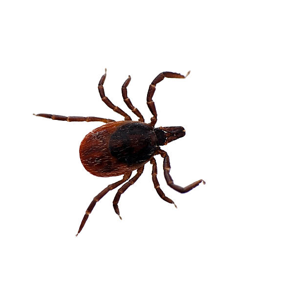 Study finds Lyme disease presence in all U.S. states
