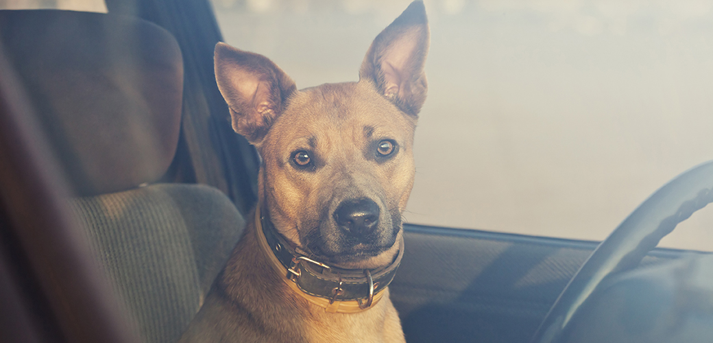 Trussville amends animal ordinance to include police to save distressed animals in vehicles