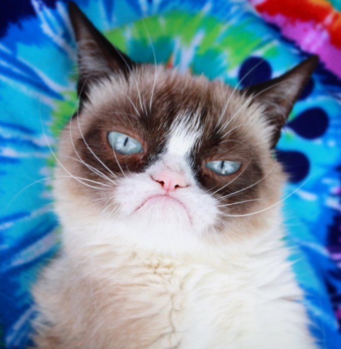 'Grumpy Cat' dead after urinary tract infection
