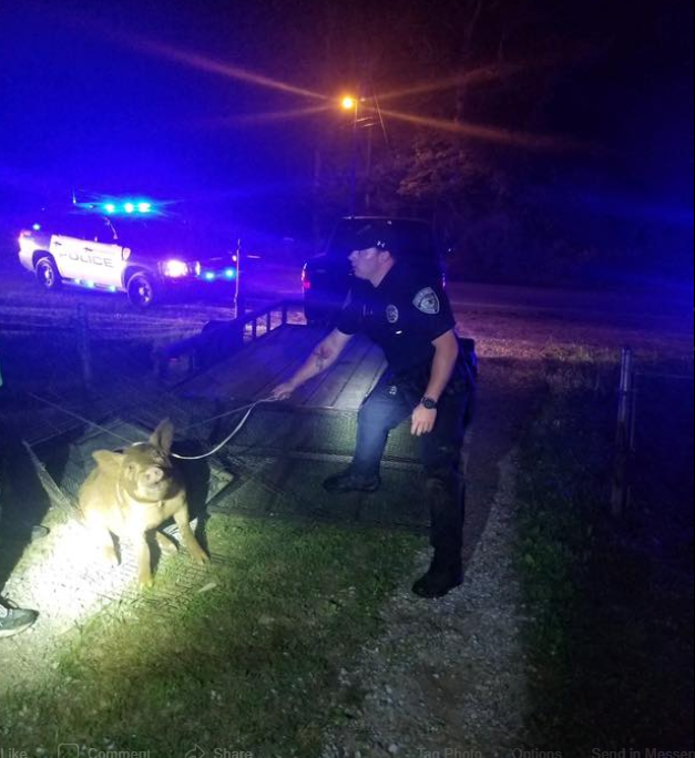 Trussville Police capture pig on Roper Road