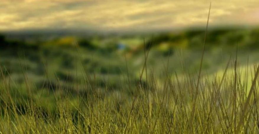 'Chicken sludge' on fields draws complaints of stench, flies