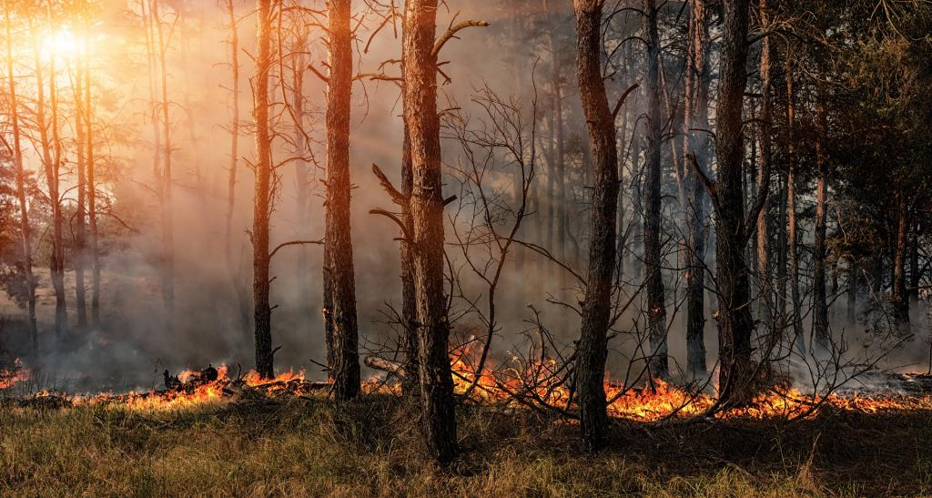 Wildfires still a threat despite rain in Alabama