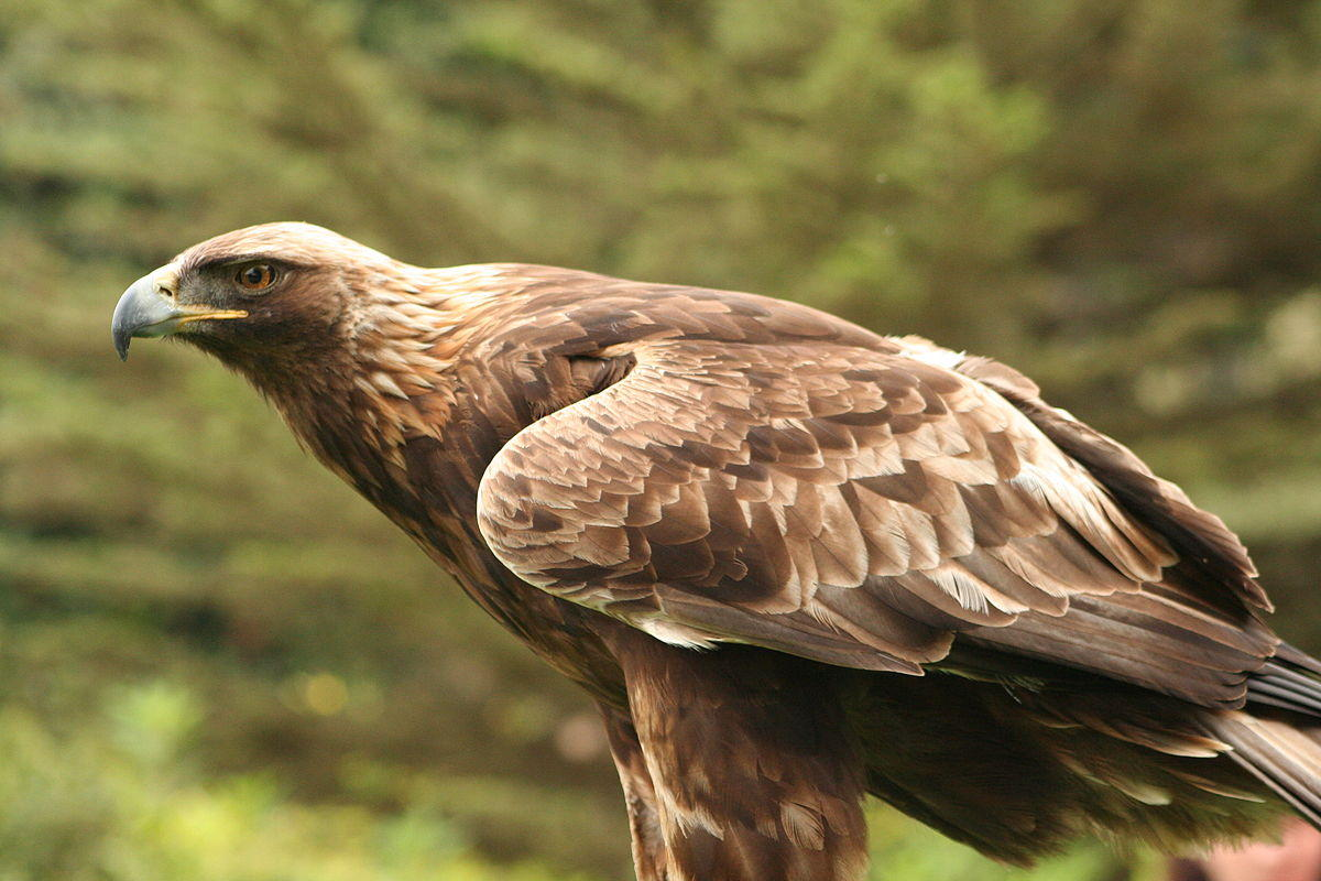 Golden Eagles returning to Alabama after spending winter abroad