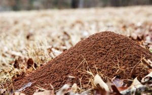How To Get Rid Of Ant Hills The Trussville Tribune