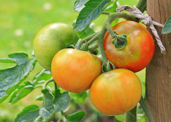 Vegetable gardening for beginners: The basics of planting, growing a vegetable garden