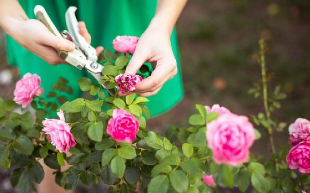 How to prune flowers