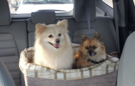 Hot Dog: Trussville PD urging pet owners to avoid leaving pets in cars