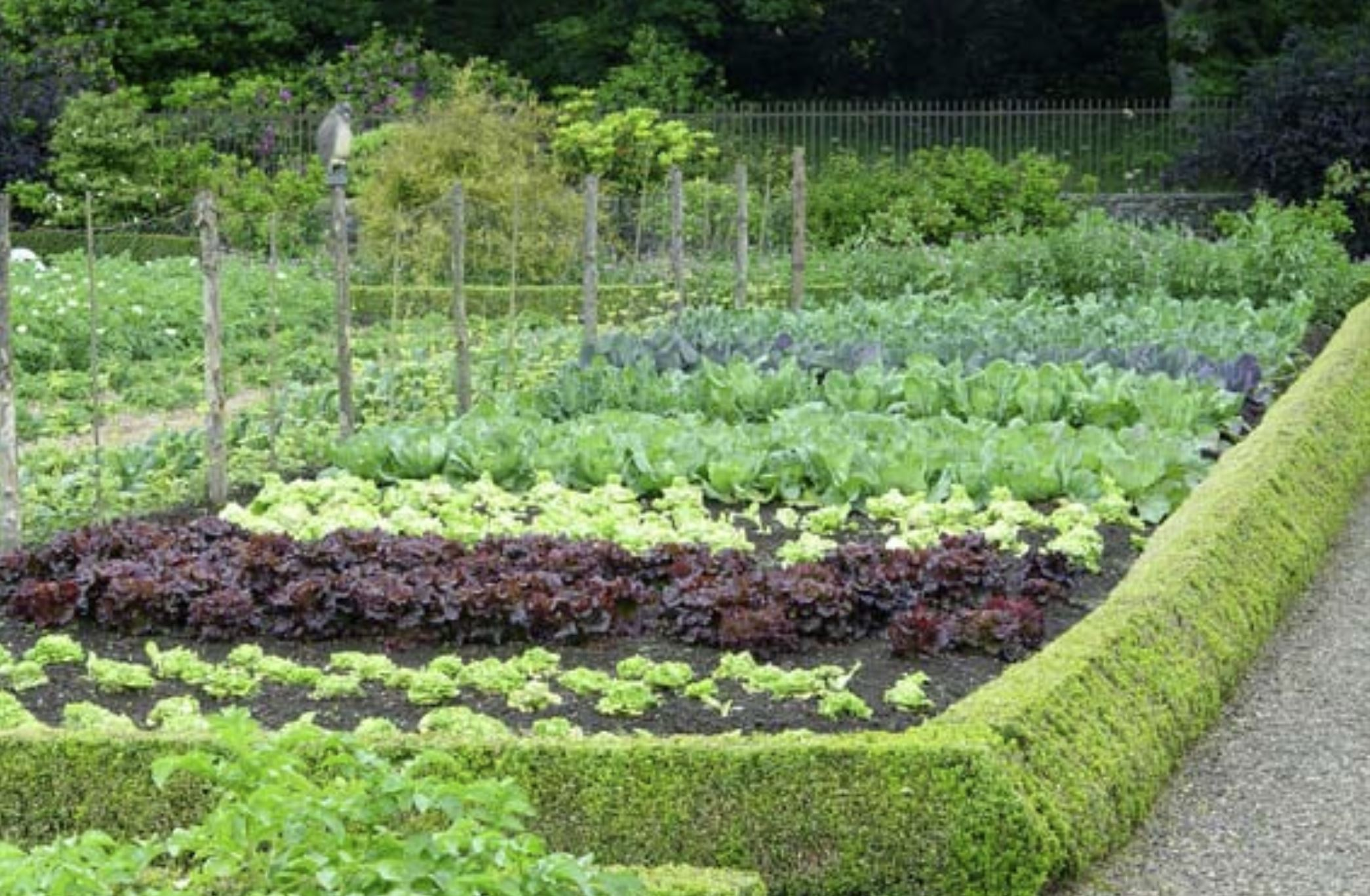 How to replant a vegetable garden in the summer for a big fall harvest