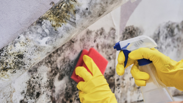 HOME SERVICES: How to tell if there's mold in your air ducts