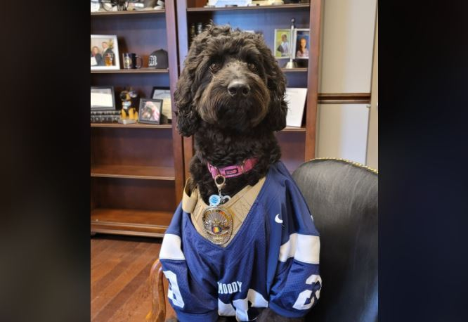 Izzy she sweet? Moody therapy dog comforting kids in schools