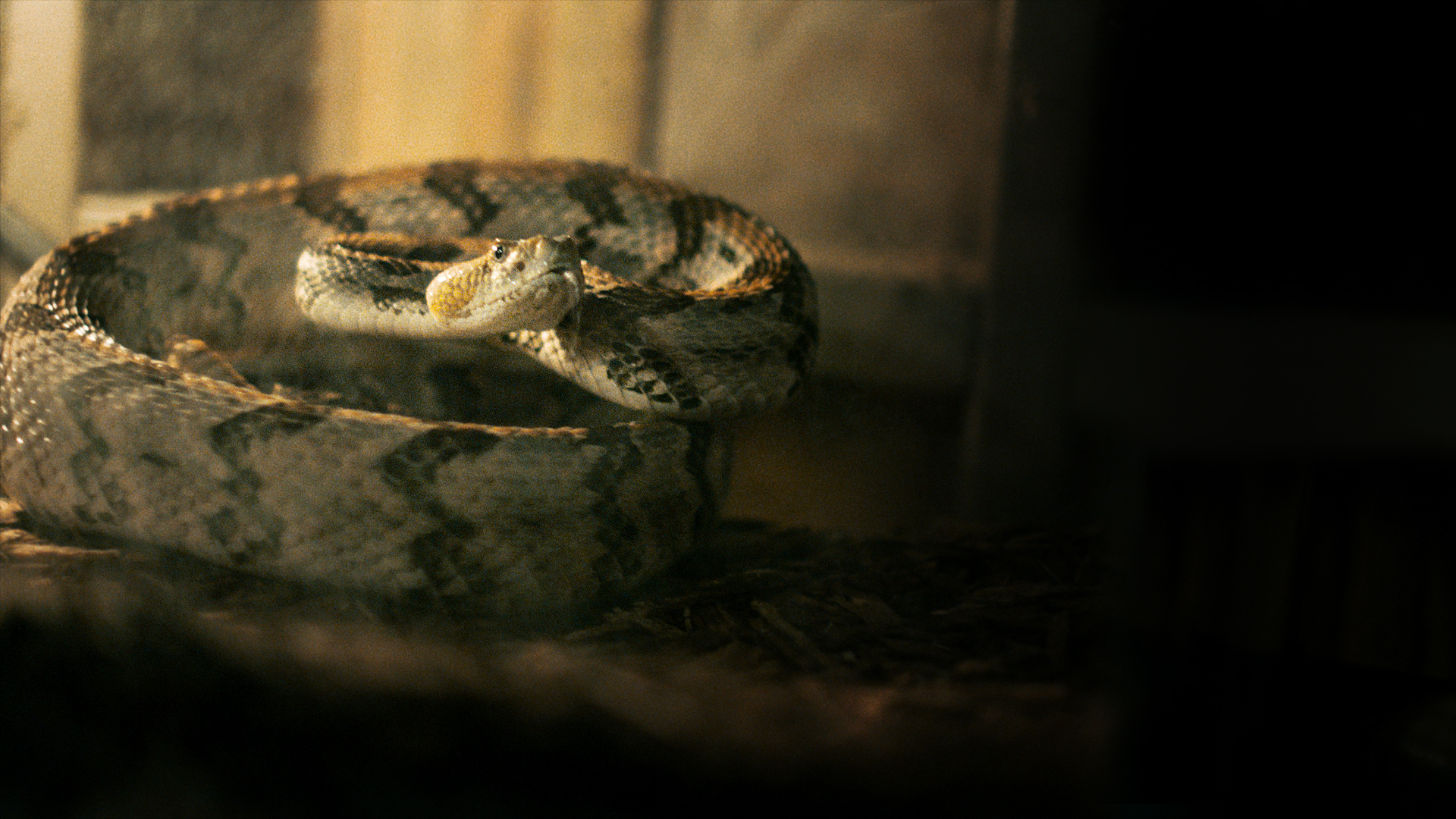 'Alabama Snake' to air on HBO, featuring minister's deadly plan with rattlesnake