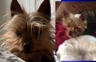 Family searching for dog after incident at Trussville boarding facility