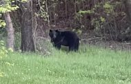 VIDEO: Another bear sighting caught on camera in Trussville