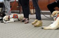 PHOTOS: TCS facility dogs show off skills at BOE meeting
